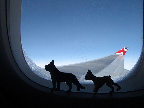 travelling with show dogs