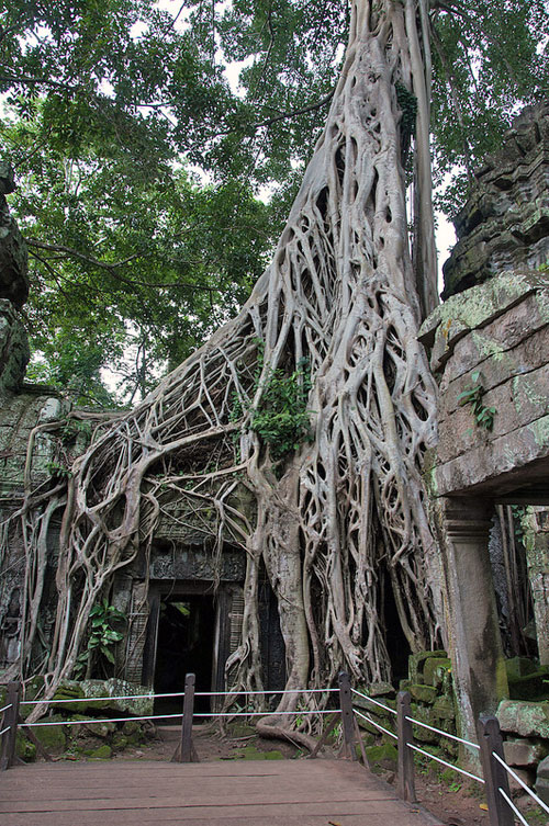 Ta Phrom's famous doorway, restricted to preserve its structure, and the safety of travellers