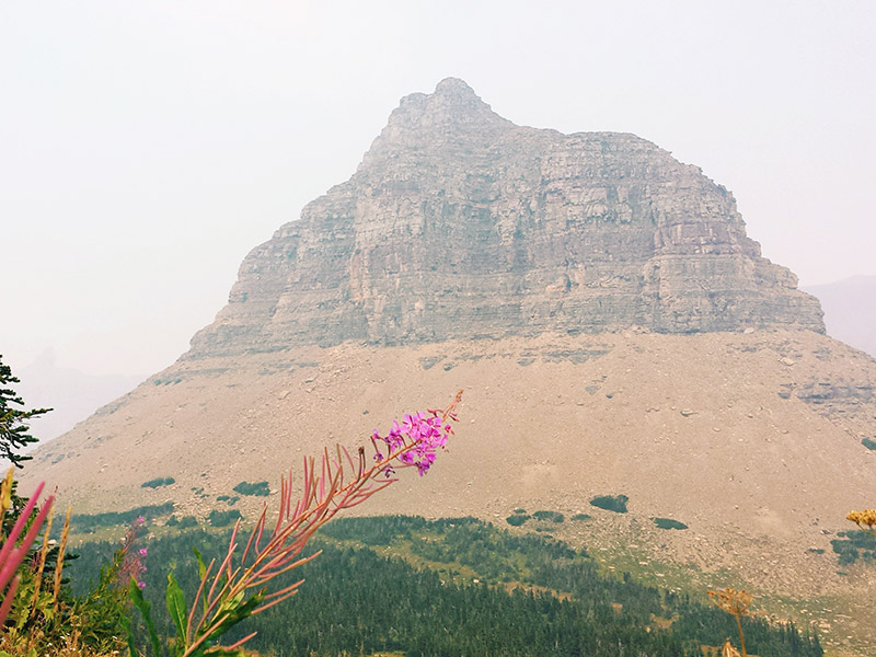 View of Logan Pass mountains from a distance.