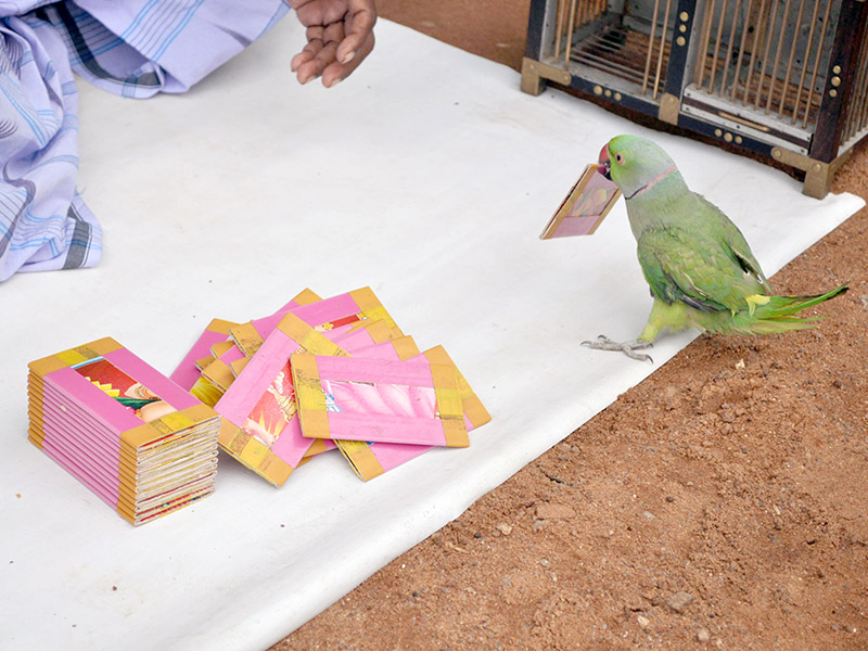 a fortune telling bird at Varaha Mandapam in Mamallapuram, Southern India