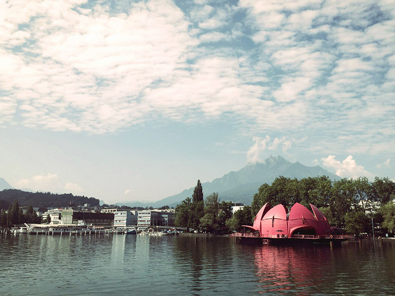 Pink water lily in Lucerne, Switzerland