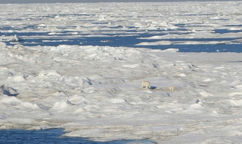 Polar bear and cub on sea ice