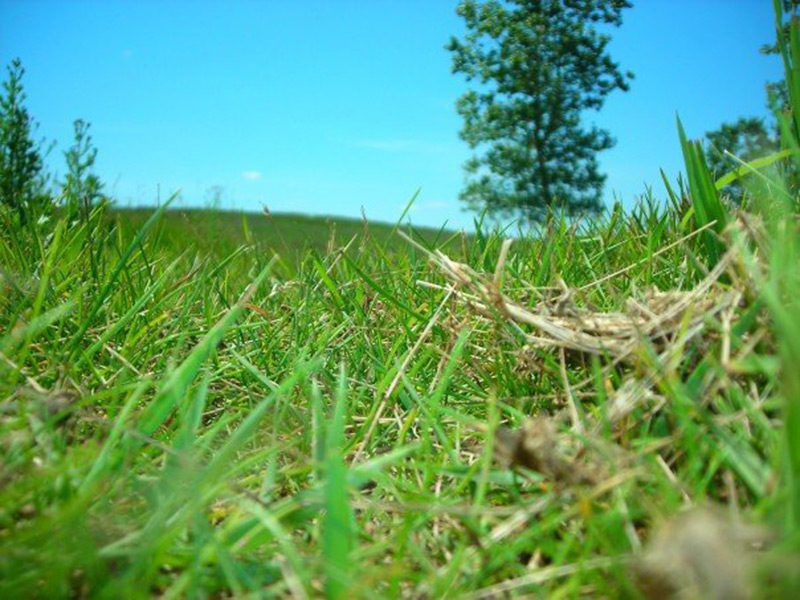 Photo of blades of grass in a Manitoba, Canada field.