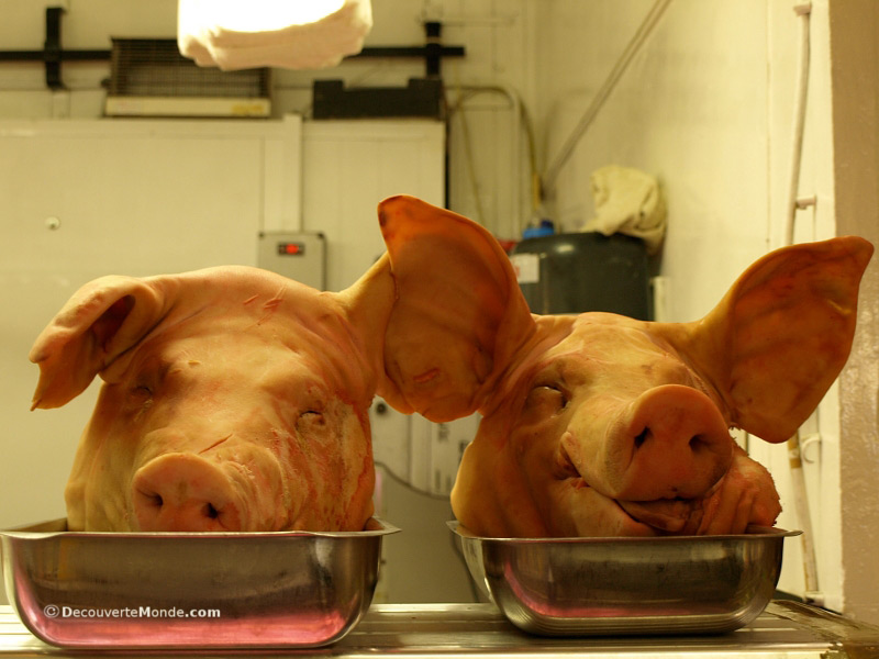 Pigs' heads on display at a market in Cork, Irland.