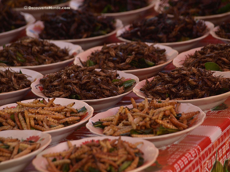 Fried insects at the Boat Racing Festival in Vientiane