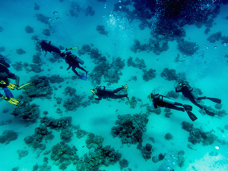 divers on the ocean floor