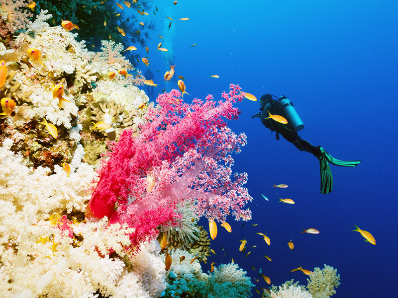 divers near coral reef, red sea, egypt