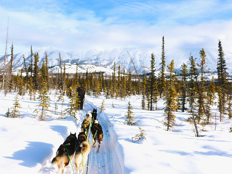 Dog-sledding is a great recreational activity to try this winter