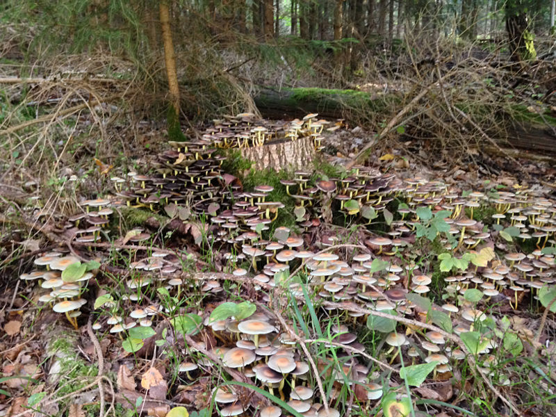 Mushrooms found on a hike in the Steigerwald Germany as part of TuGo Customer Review