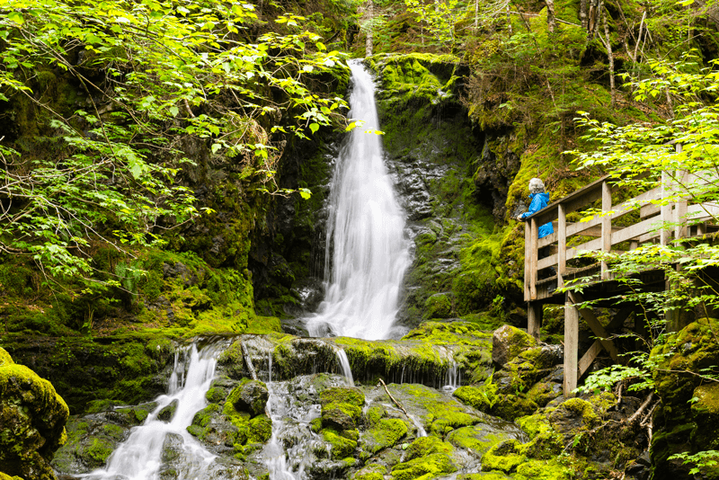 When not watching the high tides at Fundy National Park, families can hike through some lush forest paths.