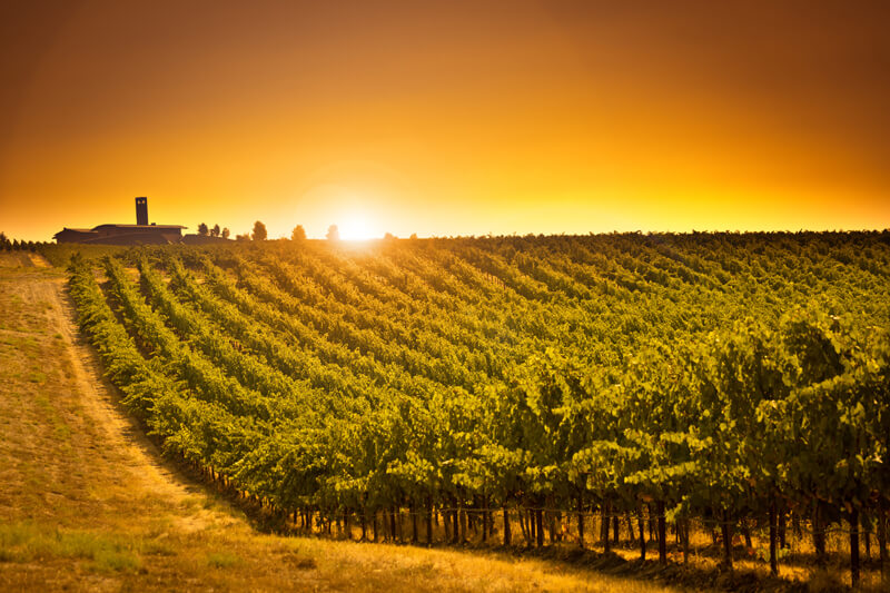 sunset-okanagan-vineyard
