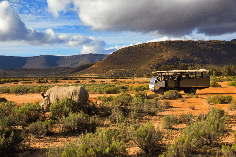Enjoy the wonders of an African Safari seated comfortably in a tour vehicle