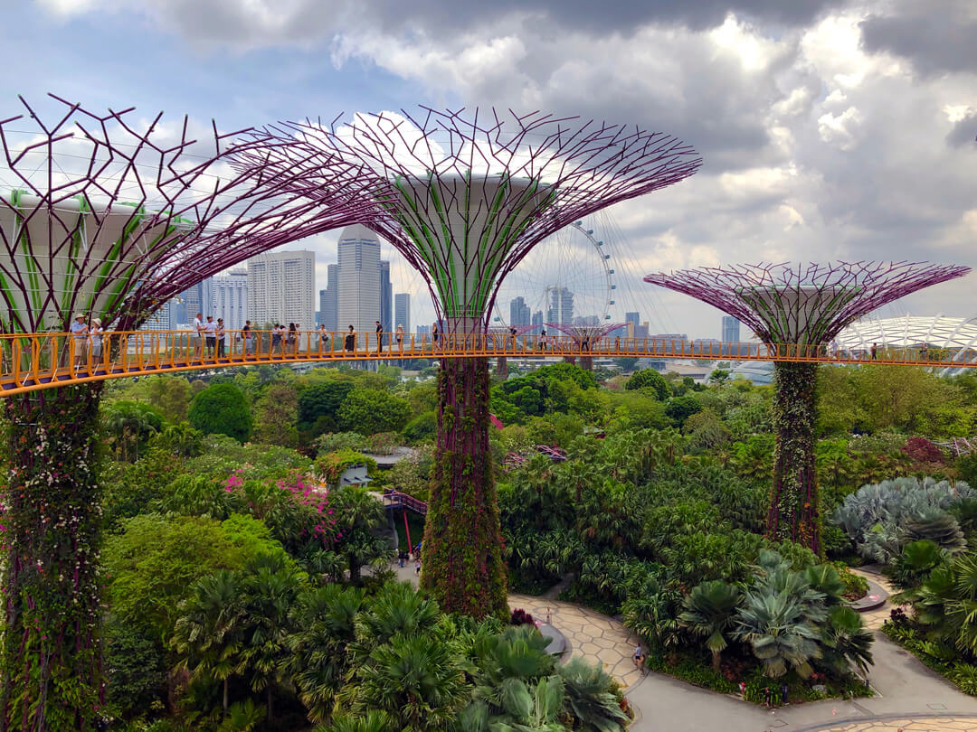 Solar-powered Supertrees, Singapore, by @jannerboy62, Unsplash.com
