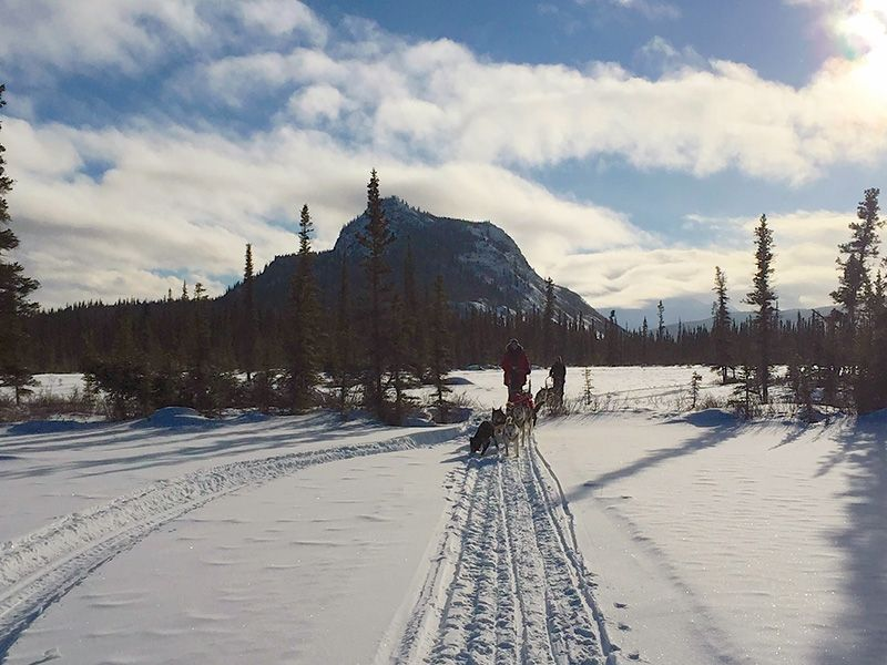 Beautiful views and peace and quiet are a great pair when dogsledding